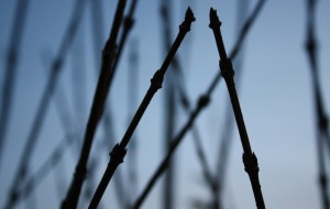 abstract twigs #2