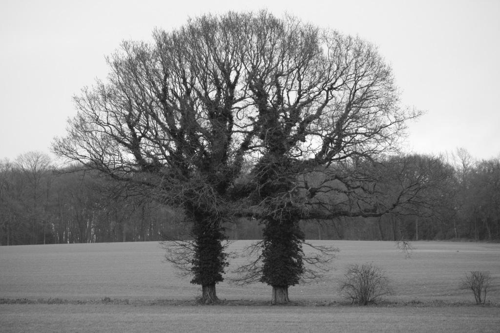 Yin and Yang trees