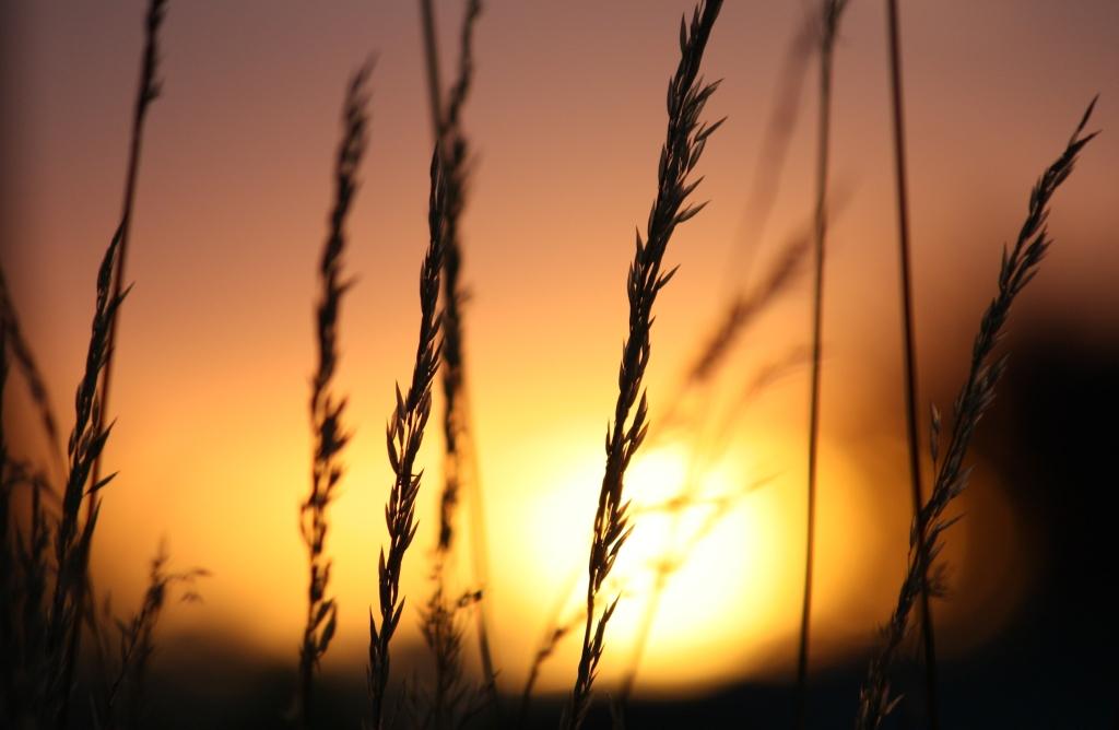 grass at sundown orange