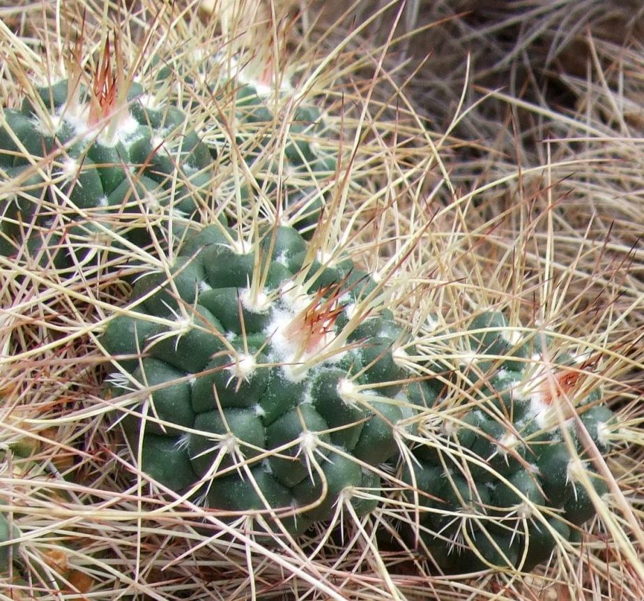 softly spiky