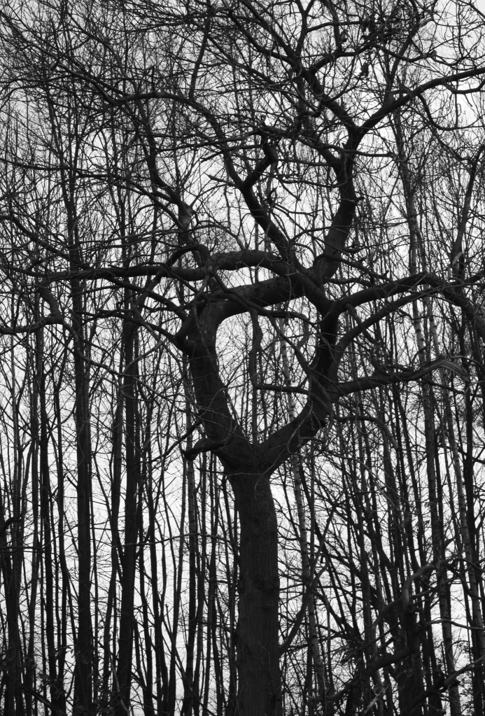 the circular tree bw