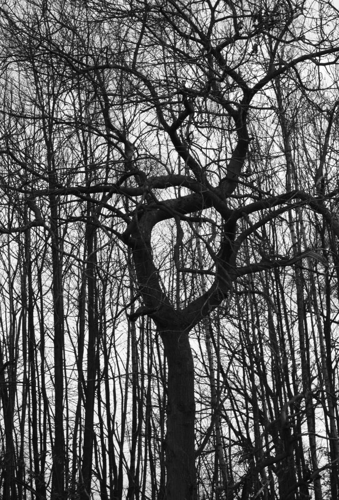 the circular tree bw