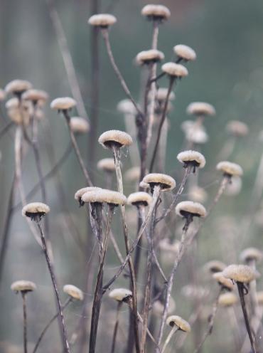 mushroom plants