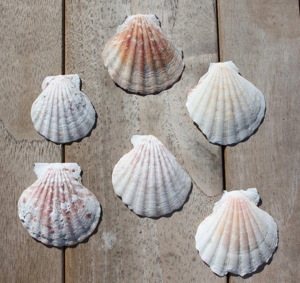 the shells