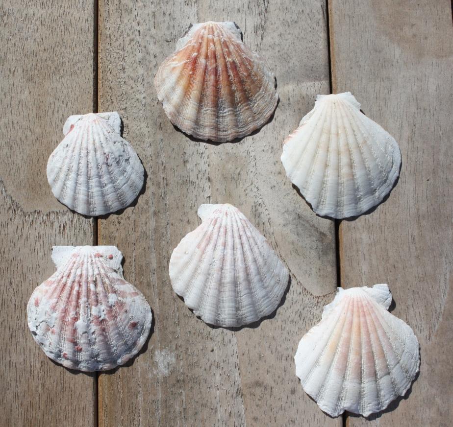 the shells