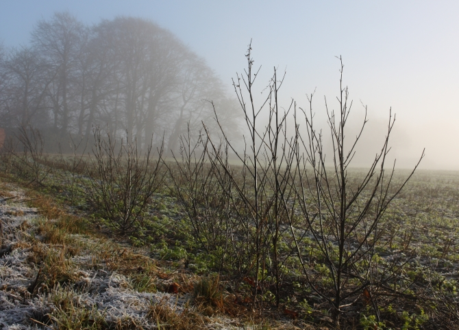 early-morning-mist